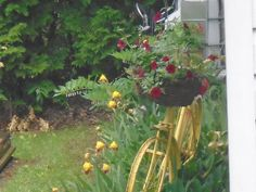 My Mom is 72. I bought her bike at my grandparent's auction for 2.00. I painted it yellow and painted the seat red. Ivy, trailing red trilogy petunias and a yellow trailer among yellow irises, lily of the valley, solomon's seal  and eventually russian sunflowers should be breath taking.