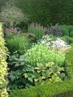 Garden plants with varying greens. Great foliage colors.