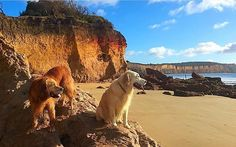 It's not just humans who enjoy the fantastic scenery that the Great Ocean Road has to offer. Great shot from Anglesea courtesy of @dollyandarkie #liveinvictoria #victoria #vic #anglesea #greatoceanroad #gor #surfcoast #dogs #dogsofinstagram #instadog #doggram #beach #rocks #coast #sea #ocean #surf #waves #play #swim #beautiful #scenic #nature #love #australia #liveinaustralia by liveinvictoria