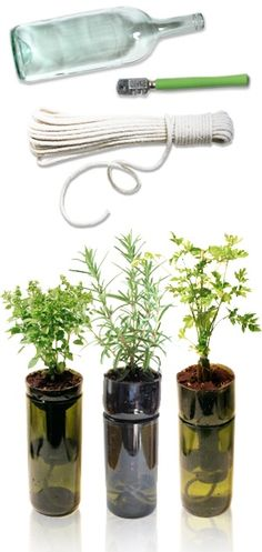 Cut wine bottles for planting herbs. Plant your favorite herb and fill up the bottom with water. It will sip the water thru the rope.