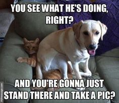 Dog sit on cat. Click to see more and comment...