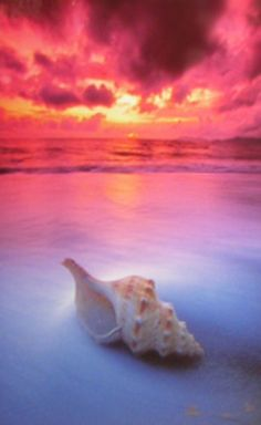 Shell Sunrise (small edition) by Peter Lik Peter Lik Photography, Stunning Photography, Landscape Photography, Art Photography, Great Pictures, Nature Pictures, Cool Photos, Beautiful Pictures, Picture Ideas