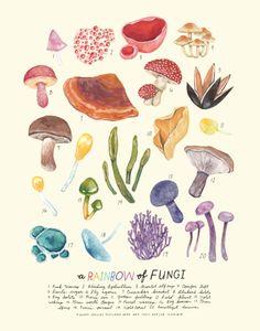 A RAINBOW of fungi!