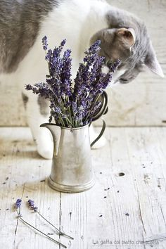 Caring For Your Skin With Easy Tips – Beauty Skin Care Products Lavender Cottage, Lavender Garden, French Lavender, Lavender Fields, Lavender Color, Lavender Flowers, Lavender Plants, Growing Lavender, Shabby Vintage
