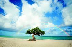 The Happy Island of Aruba! Grab Your Swim Suite, Le'ts Go! #sponsored