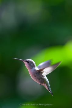 Flying Hummingbird by Nathalie Padron on 500px