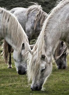 Long Mynd Ponies