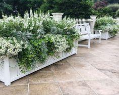 Green and white garden boxes