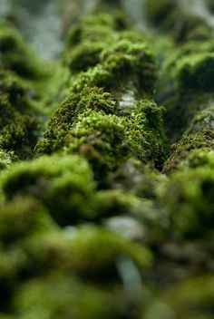 In the forest - Mossy bark