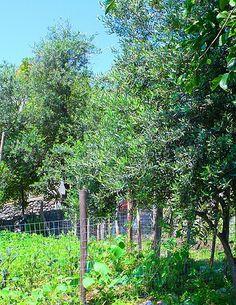 Ferienhaus: Casa del Toro in Tovere di Amalfi - Kochen Sie mit frischem Gemüse aus dem Garten. www.amalfi-ferien.de
