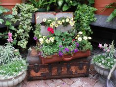 Putting plants in an old suitcase! Great idea!  Biltmore Estate in the Conservatory