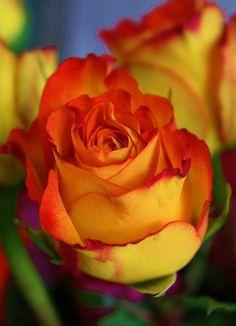 ✯ Orange Supreme by reannon