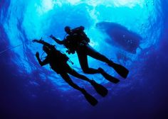 Looking for scuba diving in Kerala? Bond Safari is the official PADI certified scuba diving agency in Kerala, offering water sports activities like snorkeling and scuba diving in Kovalam. Best Scuba Diving, Scuba Diving Gear, Cave Diving, Beach Activities, Adventure Activities, Menorca, Whale Watching Destinations, Small Shark, Scuba Diving Equipment