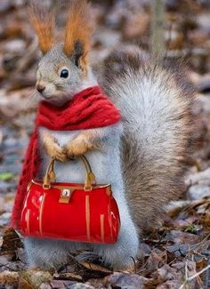 How the squirrels look at my house... lol