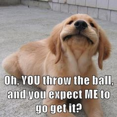 Oh, YOU throw the ball, and you expect ME to go get it? http://ibeebz.com