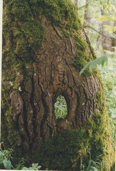 moss and tree bark