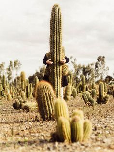 a prickly affair by twistdee. @go4fotos