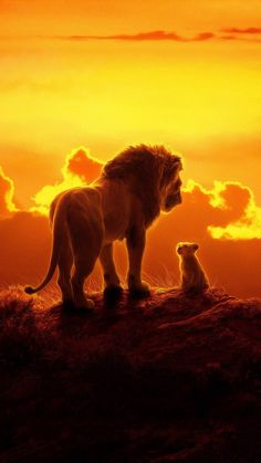 The lion king, lion and cub, 2019 film, 1080 × 2160 wallpaper lion . - Disney The lion king, lion Le Roi Lion Disney, Disney Lion King, Disney Art, Disney Films, Disney Quiz, Disney Pixar, Walt Disney, The Lion King, Lion King Art