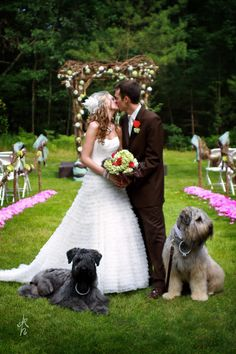 The Bride and Groom had their dogs be the ring bearers