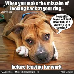 ME: *Leaves whole box while bawling hysterically* #DogParentProblems #TheStruggle #mcaspets