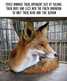 Unbelievable Facts About Animals | www.ghantagiri.com #ghantagiri #Animals #Fox