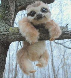Be a Sloth Hang on for your love Click here for more adorable animal pics!