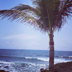 #palmtree #ocean #mexico #playadelcarmen #dreamsresort #puertoaventuras #beach #vacation #Dreamspuertoaventuras