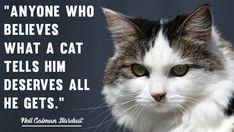 Cruelty Free Blog (@Go_Cruelty_Free) / Twitter Cat Love Quotes, Free Blog, Cruelty Free, Twitter, Cats, Animals, Gatos, Animales, Animaux