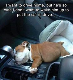 I want to drive home, but he's so cute I don't want to wake him up to put the car in drive...