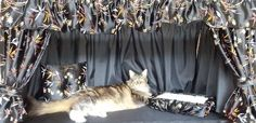 Kitten Mittens, Cat Room, Pet Life, Cage, Curtains, Blinds, Draping, Picture Window Treatments, Window Treatments