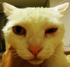 SOS Animal  com amor: Conjuntivite nos gatos  saiba como tratar