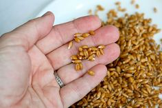 Learn how to sprout grains at home in this 8-minute video. Cook with sprouted whole grains or use them to make your own sprouted flour.