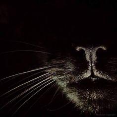 Asustar al cuervo - Black Cat - Gatos I Love Cats, Big Cats, Cool Cats, Cats And Kittens, Kitty Cats, Beautiful Cats, Animals Beautiful, Cute Animals, Crazy Cat Lady