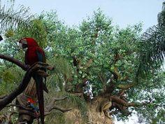 Discovery Island - Disney's Animal Kingdom Theme Park