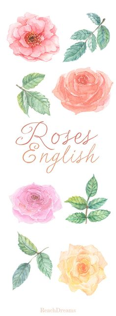 English Roses Watercolour Clipart. Hand painted от ReachDreams