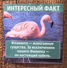 Парень развесил повсему зоопарку фальшивые факты оживотных, чем очень повеселил посетителей