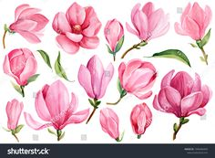 Flower Drawing Pink Magnolia watercolor by Gringoann on Flor Magnolia, Magnolia Paint, Magnolia Flower, Art And Illustration, Watercolor Illustration, Art Illustrations, Tatto Floral, Watercolor Flowers, Watercolor Paintings