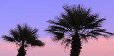 palme in controluce: vasto