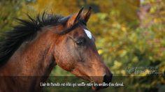 L'air du Paradis est celui qui souffle entre les oreilles d'un cheval.