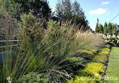 wrzośce golden starlet i rubinteppich- doskonale radza sobie w słońcu Country Roads, Plants, Plant, Planets
