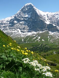 Swiss Alps - we'll go in search of Heidi, maybe Booker will be there.
