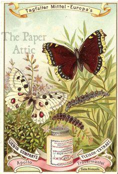Butterflies Antique Vintage German Liebig Chromo Trade Card#5