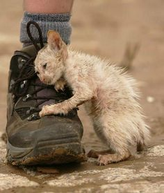 Beauty Without Cruelty.. ♡ ♡ ♡ Please HELP homeless cats & dogs & other animals!!!!!