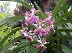 Resultado de imagen para orquideas en bucaramanga