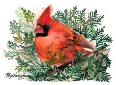 ACEO Limited Edition - Cardinal in the Cedar
