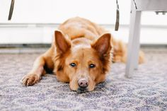 Artrosis en perros: Causas, síntomas y tratamiento