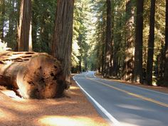photo by Lu Chien-Ping Redwood Highway California Upper Eden Falls, Arkansas Oh The Places You'll Go, Places To Travel, Places To Visit, Pacific Coast Highway, Big Sur, Newport Beach, Santa Monica, Redwood Forest California, Thing 1
