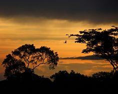 Todos os tamanhos | Guacamayo at Amazonia sunset | Flickr – Compartilhamento de fotos!