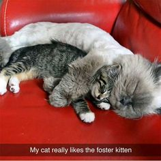 Animal Pictures with Captions that will Make You Smile - 16