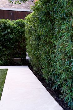 A bamboo garden hedge. Live bamboo plants can provide coverage and set up bound. A bamboo garden h Bamboo Hedge, Bamboo Plants, Bamboo Privacy Fence, Privacy Plants, Fence Plants, Garden Privacy, Backyard Privacy, Garden Fencing, Garden Path